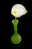White Calla lilly flower in green vase Stock Photos
