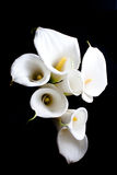White calla lily. Bouquet of white calla lily, purpose for wedding or something romantic Stock Photography