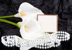 White callas with banner add. Beautiful white callas with banner add Royalty Free Stock Images
