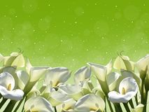 White flowers on a green background. royalty free stock images