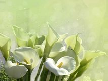 White flowers on a green background. royalty free stock photo