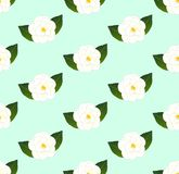 White Camellia Flower Seamless on Green Mint Background. Vector Illustration. Royalty Free Stock Photography