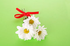 White camomile bouquet Royalty Free Stock Photography