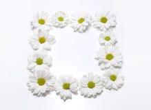 White camomile frame on white Stock Image