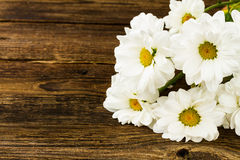 White camomile Stock Photography