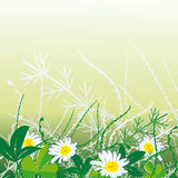 White camomiles in grass Royalty Free Stock Photography