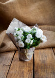 White Campanula terry flowers in paper packaging Royalty Free Stock Images