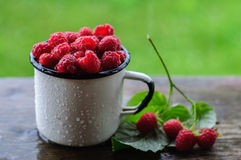White can and mug with fresh raspberry on rain. White enamel can and mug with fresh raspberry on rain Royalty Free Stock Photos