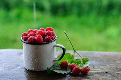 White can and mug with fresh raspberry on rain. White enamel can and mug with fresh raspberry on rain Stock Images
