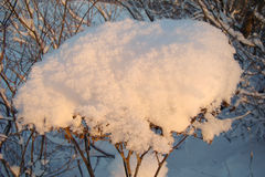 White cap of snow. On the dry plant Royalty Free Stock Photo