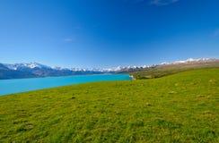 White Capped Peak across an alpine meadow Stock Photos