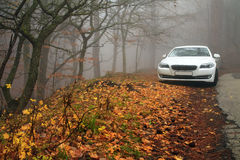 White car in the autumn forest Stock Image