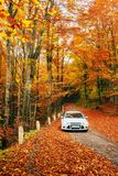 White car on a forest trail. Golden autumn Stock Images