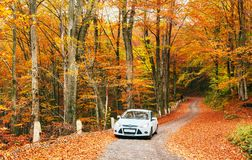 White car on a forest trail. Golden autumn Stock Image
