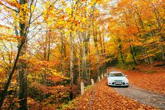 White car on a forest trail. Golden autumn Royalty Free Stock Photography