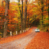 White car on a forest trail. Golden autumn Royalty Free Stock Photo