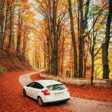 White car on a forest trail. Golden autumn Royalty Free Stock Images