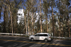 The white car in movement. The white car quickly goes on mountain road. An eucalyptus wood Stock Images
