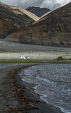 White car at Pangong lake surrounded by mountain range. Royalty Free Stock Photos
