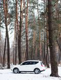 White car in the winter coniferous forest Stock Photography