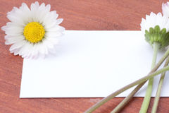 White card with flowers Royalty Free Stock Photography
