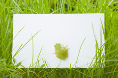 White card in grass Royalty Free Stock Image