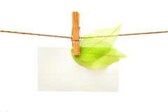 White card with green leaves and peg Royalty Free Stock Images