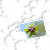 White card lucky shamrock, four-leaf clover Royalty Free Stock Photo