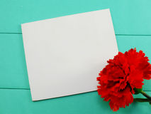 White card and red artificial carnation valentines day on green background Royalty Free Stock Images