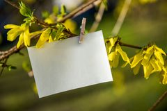White card on yellow flowers bush background. Blank card hanging on tree outdoors stock image