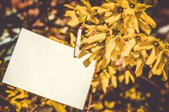 White card on yellow flowers bush background. Blank card hanging on tree outdoors royalty free stock photography