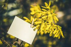 White card on yellow flowers bush background. Blank card hanging on tree outdoors stock images