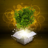 White cardboard box with magical green tree Stock Image