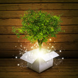White cardboard box with magical green tree Stock Photography