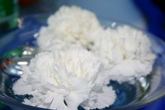 White Carnations. In a glass basin Royalty Free Stock Photography