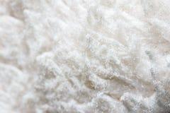 White carpet Stock Image