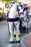 White carriage with a beautiful white horse royalty free stock images