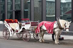 Free White Carriage With White Horse In Red Coat Parked In Old Montreal Royalty Free Stock Image - 114809326
