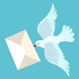 White carrier pigeon brings a letter Stock Photos