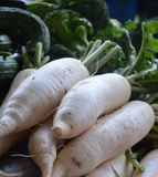 White carrots in a market Stock Images