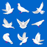White cartoon pigeon with red beak and paws illustrations set. White cartoon pigeon with red beak and paws flies, takes off, lands, cleans feathers, spreads Royalty Free Stock Images