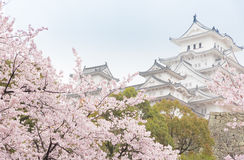 White Castle Himeji Castle in cherry blooson sakura blooming in Royalty Free Stock Photos