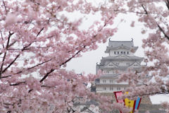 White Castle Himeji Castle in Cherry blossom bloom in foreground Stock Photos