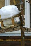 White cat stock image