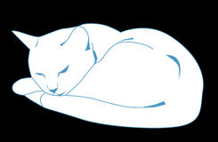 Free White Cat Stock Images - 17815584