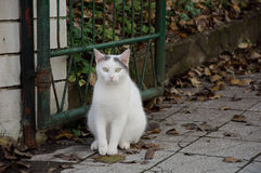 White cat. Sitting near gate in Lubliana Stock Photography
