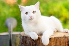 White cat. In the garden Stock Photos