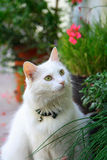 White cat. On floor in garden. Flowers in background Stock Photo