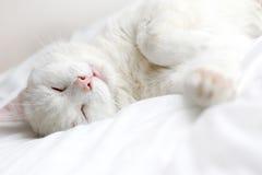 White cat. Perfectly white cat sleeping on white bedding Stock Photo