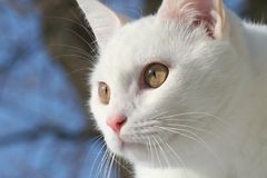 White cat. Exploring the outdoors royalty free stock photo